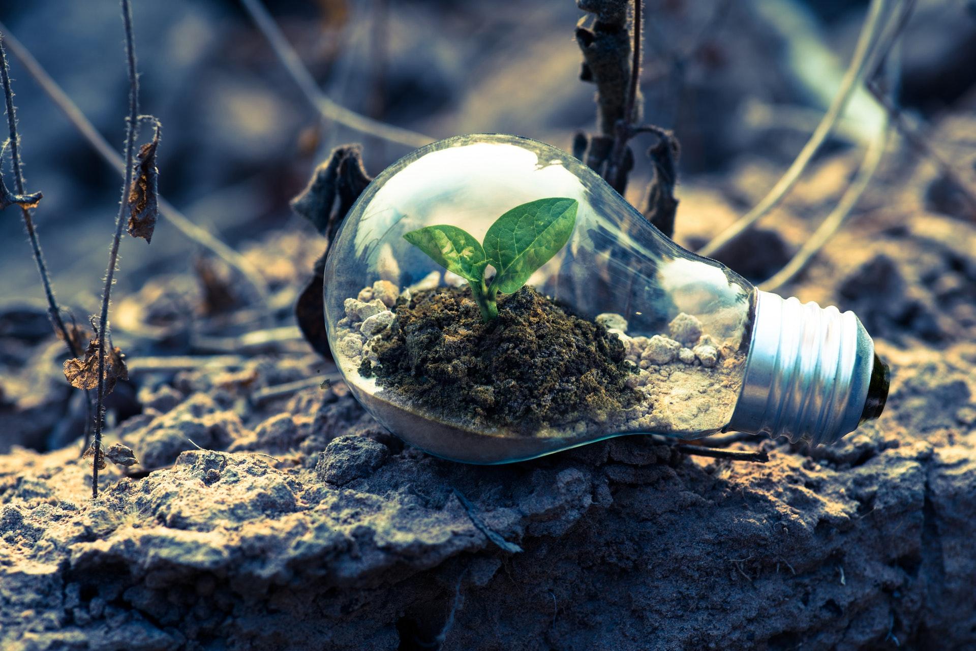 desafios e oportunidades para as startups verdes